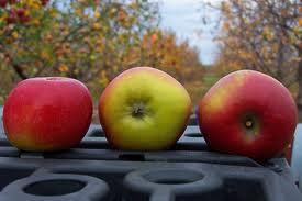 Image - Apples